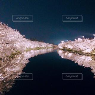 水面に映る桜の写真・画像素材[4371920]