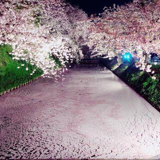 夜の花筏の写真・画像素材[4371921]