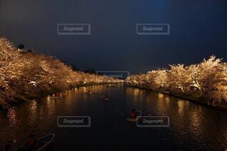 公園の夜桜の写真・画像素材[4371918]