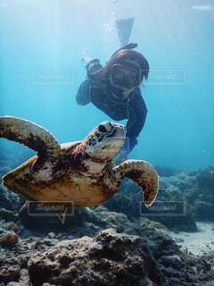 海亀とダイビングの写真・画像素材[4380173]