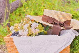 花,屋外,草,Nikon,カンカン帽子