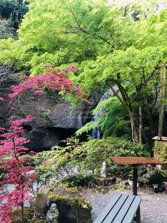 自然,滝,マイナスイオン,裏見の滝,常陸大子,月待の滝