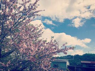 自然,空,花,春,桜,屋外,雲,樹木,可愛い,草木,淡い