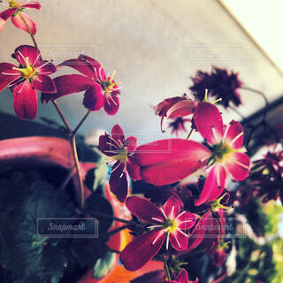 自然,風景,花,屋内,屋外,花束,家,可愛い,明るい,草木