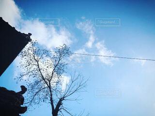 自然,風景,空,屋外,雲,青,景色,家,樹木,電線,草木