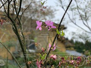 花,屋外,ピンク,樹木,草木