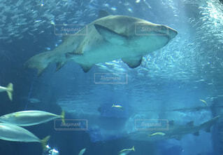 動物,魚,水族館,水面,サメ,海洋生物学