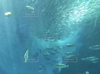 動物,魚,水族館,水面,葉,泳ぐ,水中,ダイビング,海洋生物学