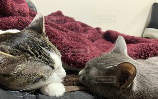 猫,動物,屋内,寝る,子猫,睡眠