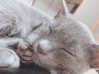 猫,動物,屋内,かわいい,ネコ科