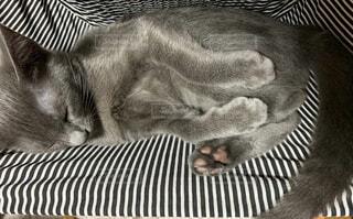 猫,動物,寝る,ネコ科