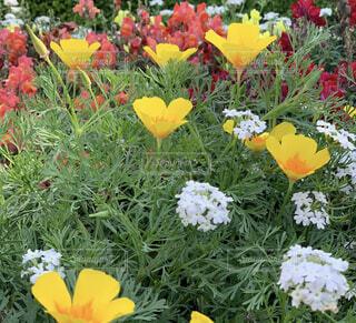 風景,花,春,黄色,景色,草木