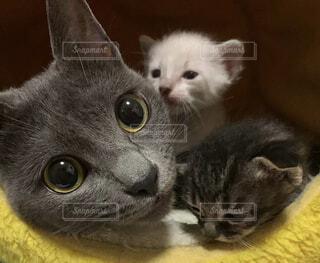 猫,動物,屋内,かわいい,黄色,景色,子猫,ネコ科