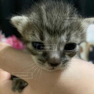 猫,動物,屋内,白,かわいい,子猫