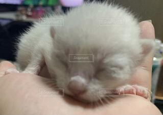 猫,動物,屋内,かわいい,子猫