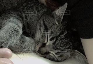 猫,動物,屋内,かわいい,寝る,子猫,ネコ科