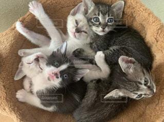 猫,動物,屋内,白,かわいい,子猫,ネコ科