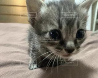 猫,動物,屋内,かわいい,子猫,ネコ科