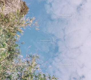 自然,空,屋外,青い空