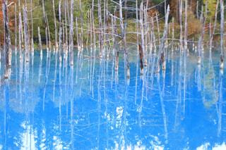 自然,屋外,湖,水面,池,反射