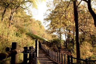 空,秋,屋外,樹木,木目,草木