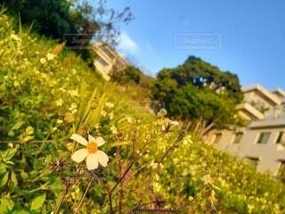 自然,空,花,屋外,樹木,野草,草木