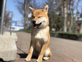 犬,動物,屋外,歩道,地面