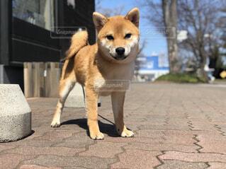 散歩に来た犬の写真・画像素材[4376686]