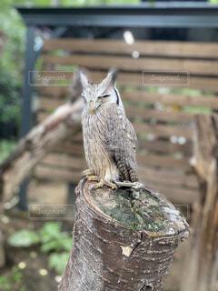 猫,動物,鳥,屋外,樹木,座る,立つ,像,木目,彫刻,フクロウ,腰掛け