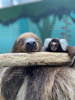 猿,動物,動物園,クマ