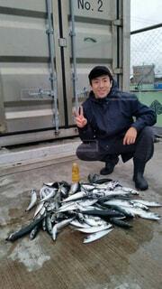 サバが大漁!!の写真・画像素材[4377406]
