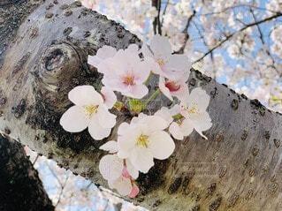 花,春,ブルーム,ブロッサム,フローラ