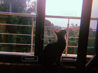 猫,建物,動物,屋内,窓,探す