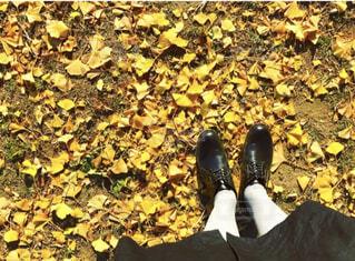 落ち葉の絨毯の写真・画像素材[4414770]