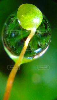 自然,緑,水面,神秘的,露,ドロップ,水分,クローズ アップ,液滴