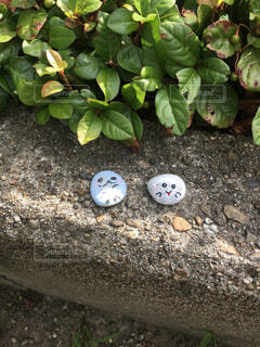 庭,石,お化け,草陰