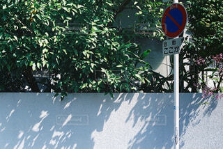 春,屋外,植物,散歩,木漏れ日,日差し,標識,レトロ,樹木,コントラスト,フィルムカメラ,交通標識,PETRI,PETRIV6II