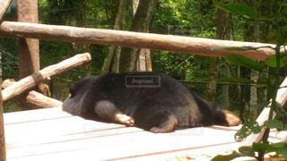 動物,爆睡,疲れた,クマ,おっさん,夕方のおっさん,昼間のおっさん,おっさんの休日