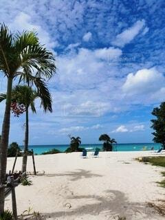 自然,風景,海,空,屋外,ビーチ,雲,砂浜,水面,海岸,ヤシの木,パーム,熱帯,休暇,ヤシ目