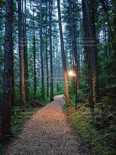 自然,風景,森林,木,屋外,草,樹木,癒し,草木