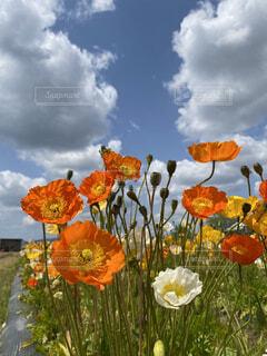 空,花,春,オレンジ