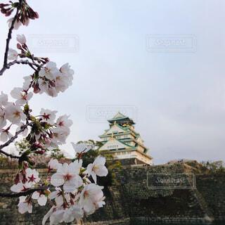 空,花,春,桜,屋外,城,草木,ブロッサム