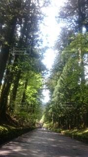 自然,風景,空,森林,屋外,樹木