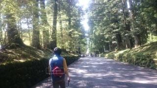 自然,風景,屋外,樹木,人物,人,旅行