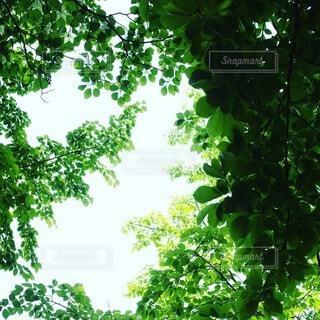 新緑の写真・画像素材[4404301]