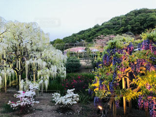 風景,空,花,屋外,景色,樹木,ライトアップ,草木,ガーデン