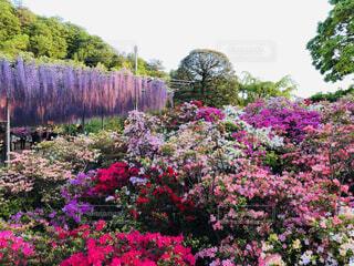 風景,花,屋外,カラフル,景色,樹木,ライトアップ,カラー,草木,ガーデン
