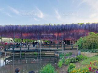 風景,空,花,屋外,緑,紫,池,ライトアップ,藤の花,カラー,ガーデン