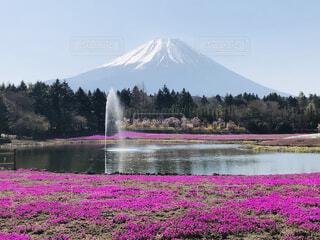 自然,空,春,富士山,屋外,水面,池,山,景色,草,樹木,噴水,芝桜,バック グラウンド