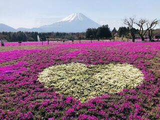風景,空,春,富士山,ピンク,景色,ハート,芝桜